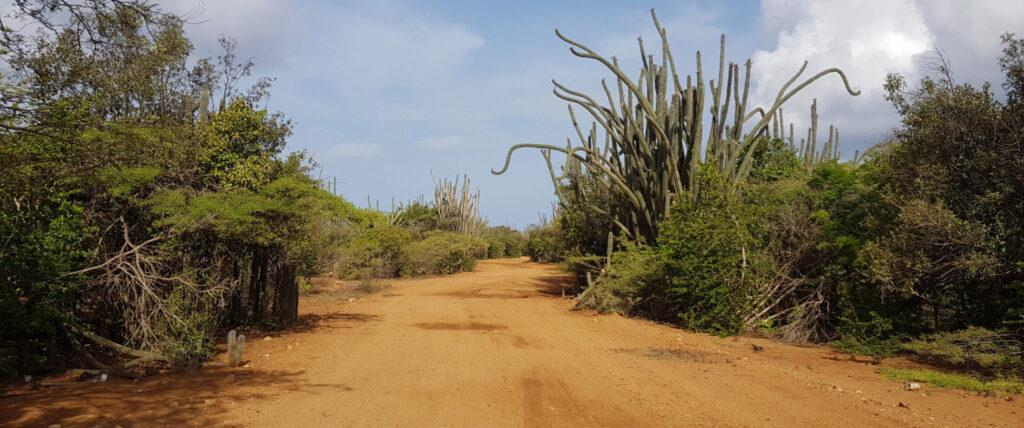 Autoroute Bonaire met veel groen