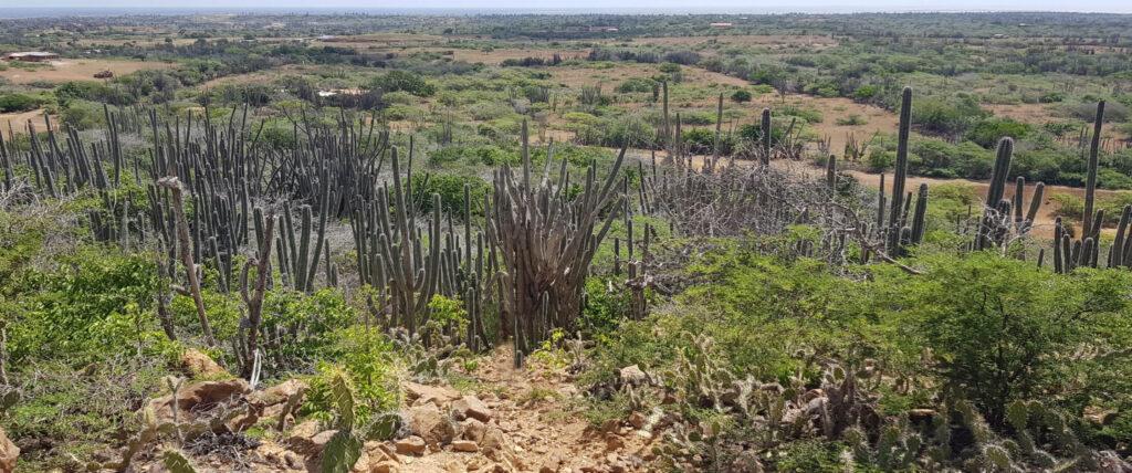 Uitzicht vanaf Bara di Karta met cactussen en de ruige natuur