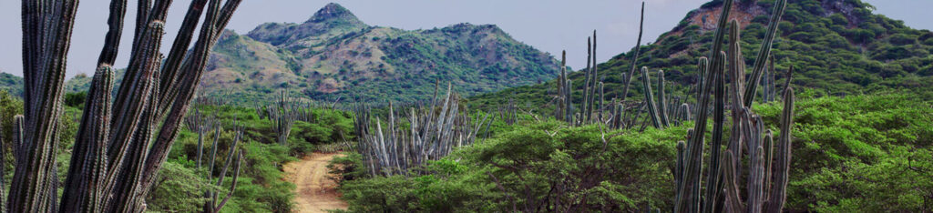 Landschap Bonaire met de vele cactussen