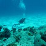 Een duiker op Bonaire
