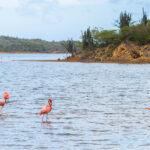 Flamingo's in Goto Meer Bonaire