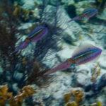 Inktvissen op Bonaire
