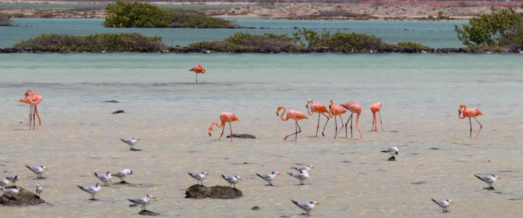 Planten en dieren Bonaire