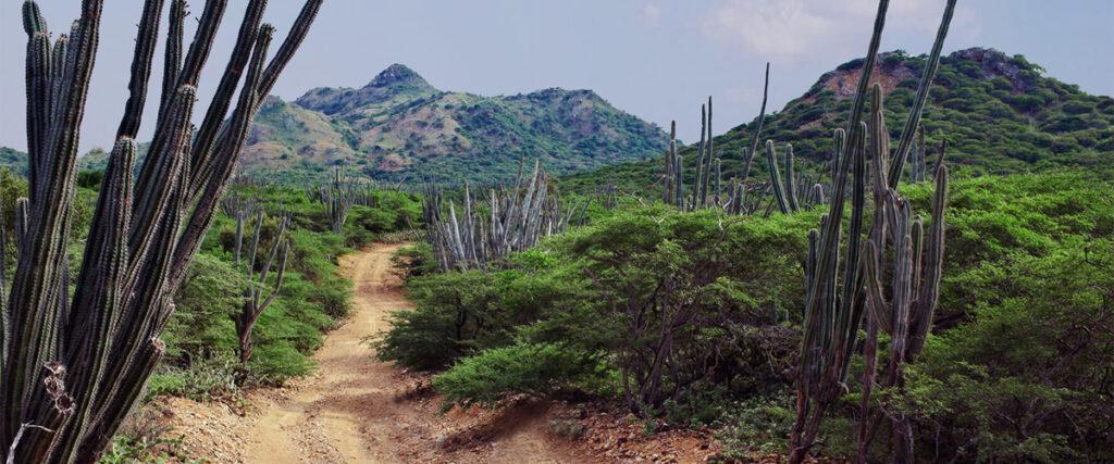 Landschap offroute Bonaire met de vele cactussen
