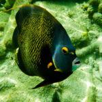Maanvis van dichtbij op Bonaire