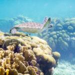 Een schildpad zwemt over een koraalrif op Bonaire