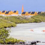 Slavenhuisjes Bonaire met op de voorgrond de salinas met flamingo's