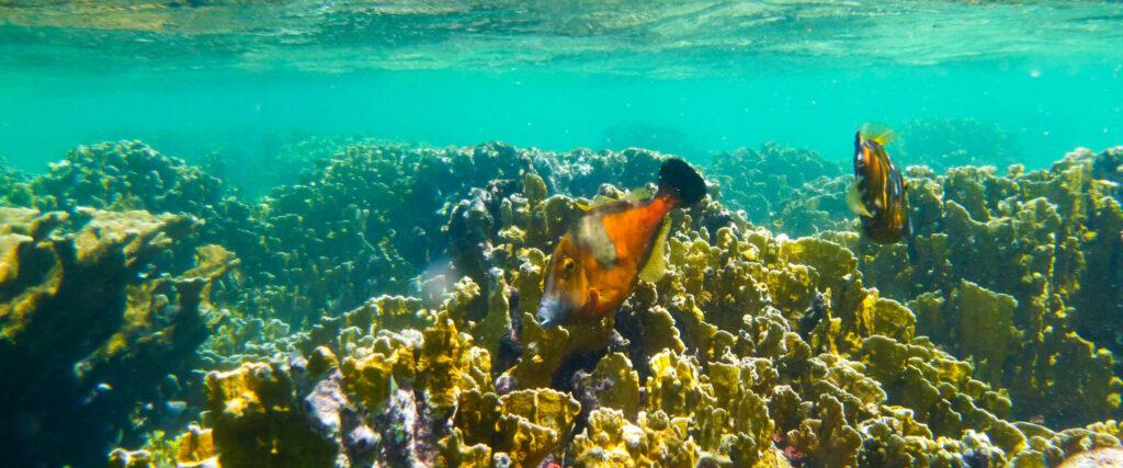 Vijlvissen rond het koraal van Bonaire