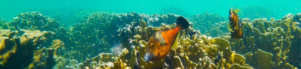 Duiken en snorkelen Bonaire - Vijlvissen