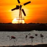 Sunset Bonaire met molen en flamingo's
