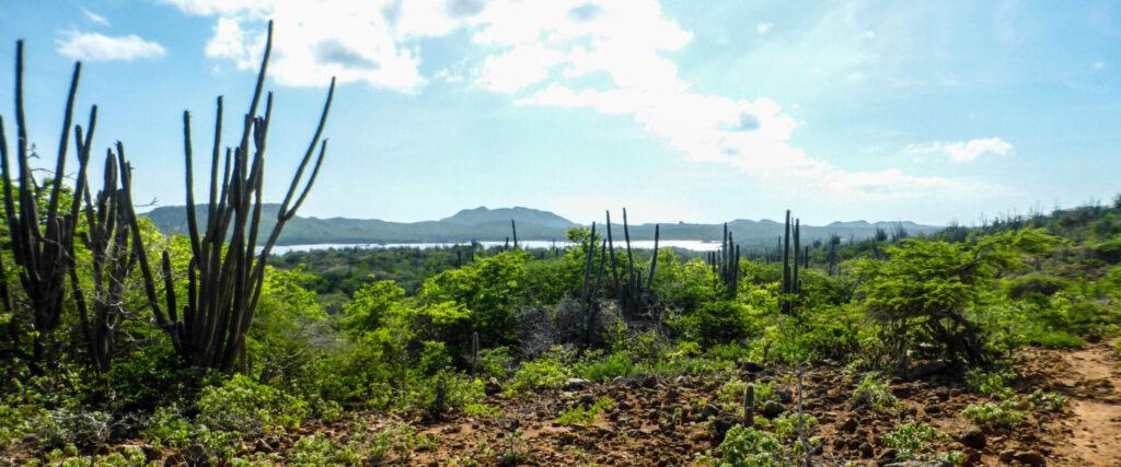 Wandelen door de natuur van Bonaire