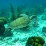 Duiken en snorkelen Bonaire