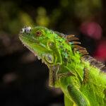 Flora en fauna Bonaire