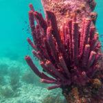 Koraal op zoutpier Bonaire