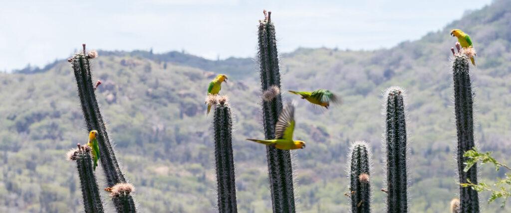 Vogels spotten Bonaire