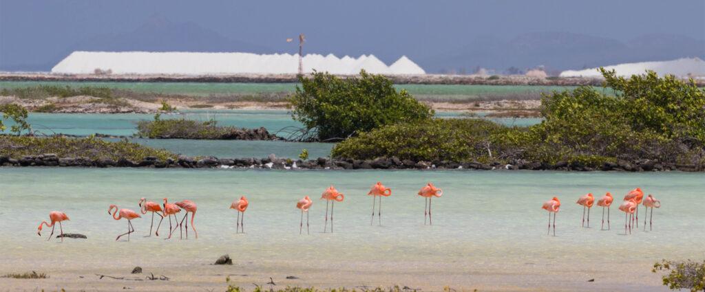 Zoutbergen en flamingo's Bonaire